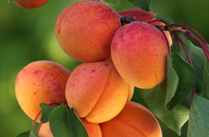 Top 10 grow your own fruit