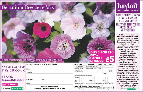 Geranium Breeder's Mix