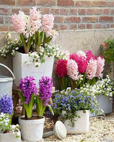 Hyacinthus fragrance mix