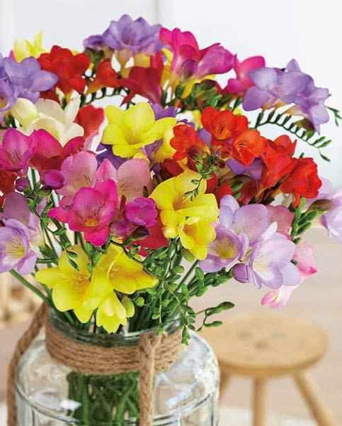 Freesia Single Mix