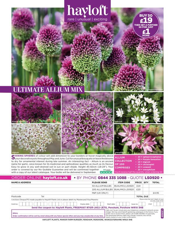 LS0920 Ultimate Alliums