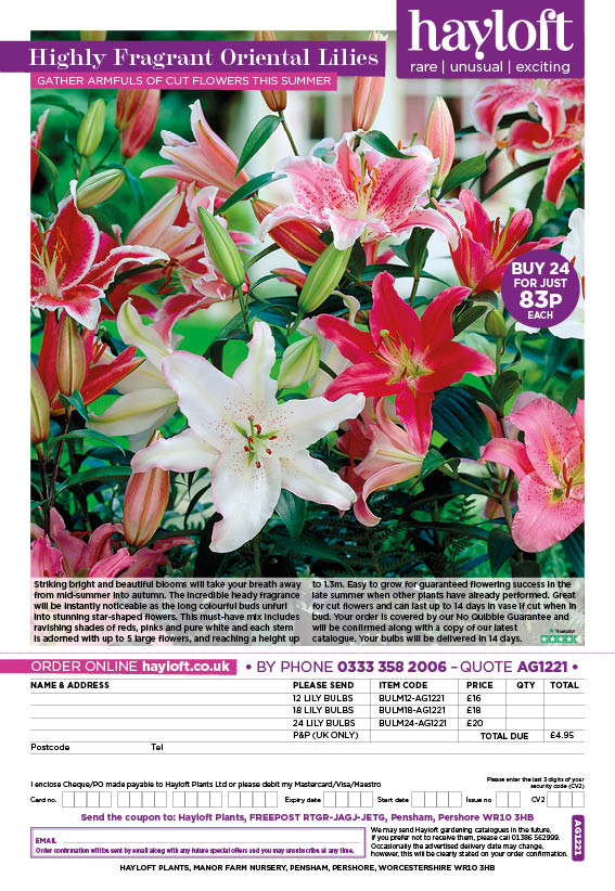 Highly Fragrant Oriental Lilies