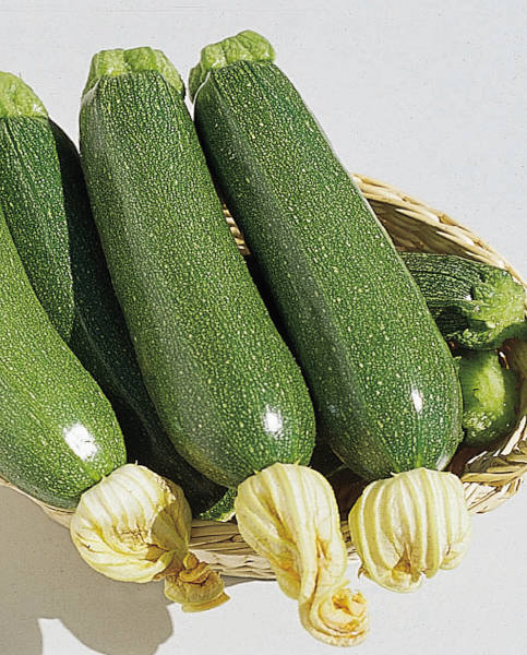 Courgette Defender