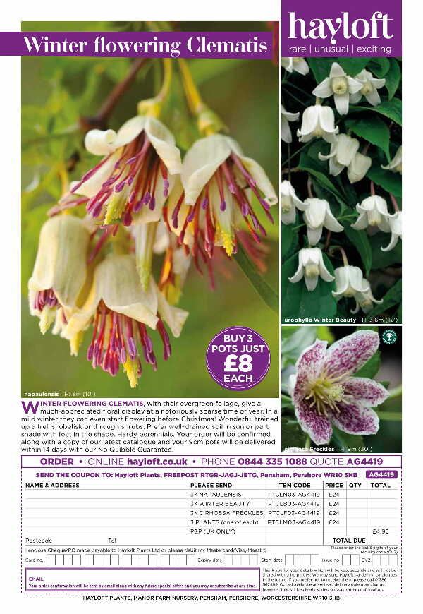 Winter Flowering Clematis Collection