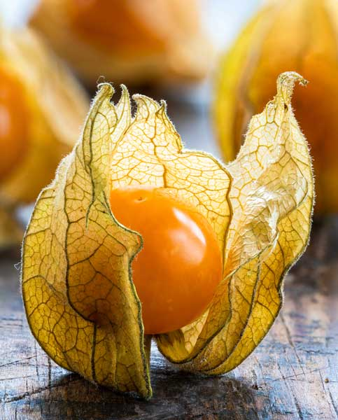 Physalis Cape Gooseberry