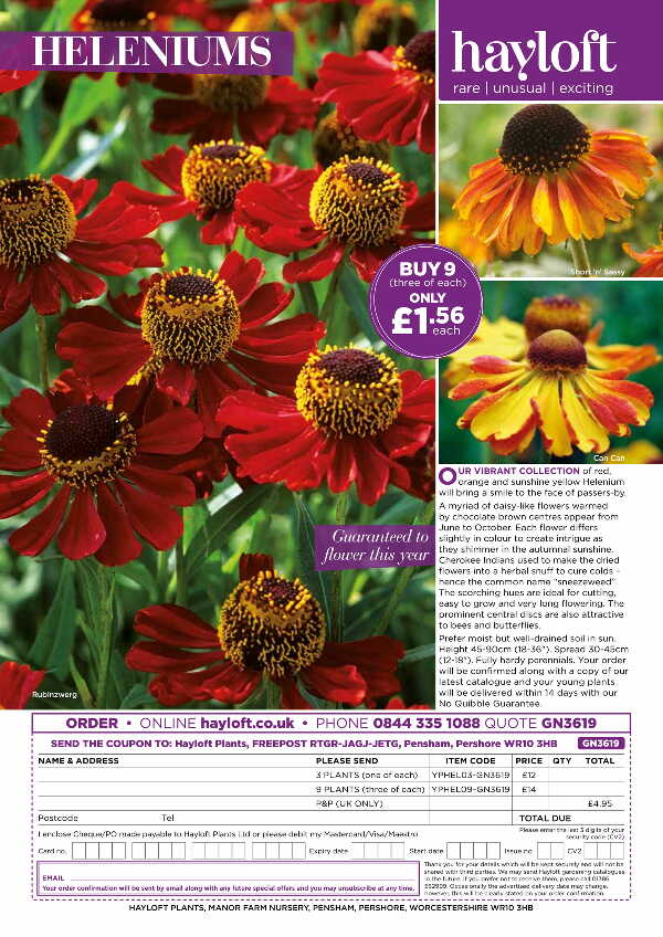 Helenium Collection