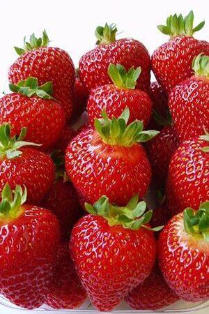 Strawberry (Fragaria) Collection