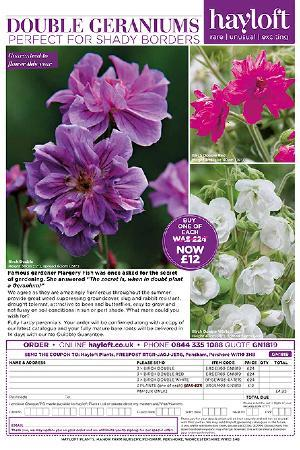 Geranium Birch Double Collection