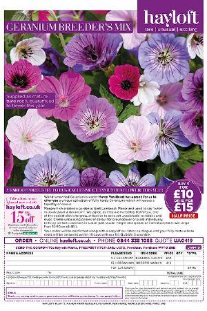 Geranium Breeders Mix