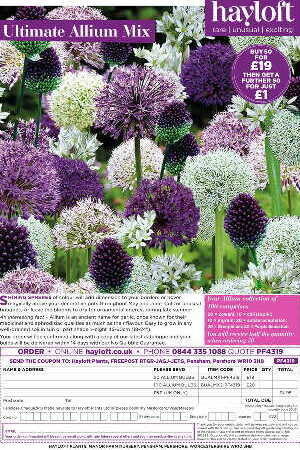 Ultimate Allium Mix