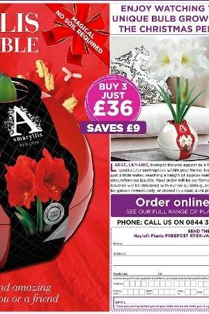 Amaryllis Collection