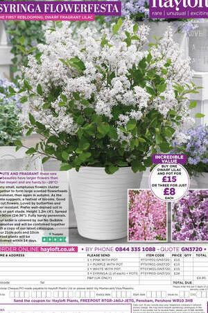 Syringa Flowerfest Collection