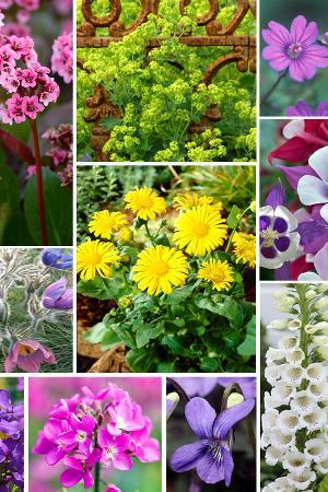 Hardy Spring Flowering Perennials