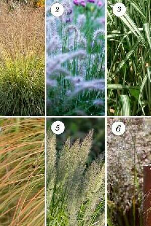 Glorious Grasses Collection