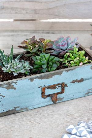 Rustic Drawer with Succulent Mix
