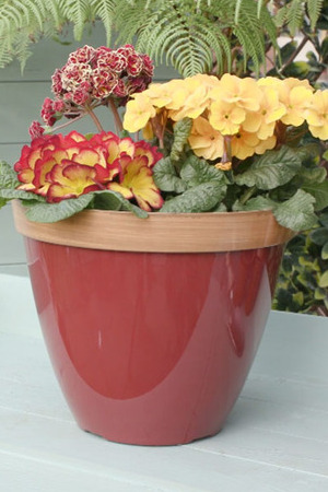 Red Provence Planter