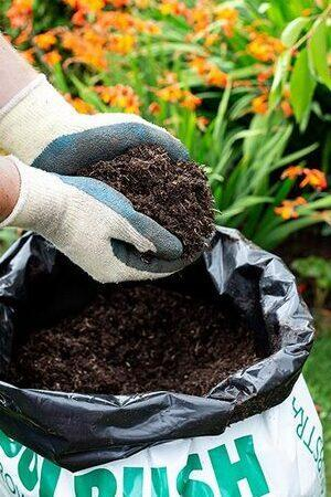Bulrush Professional Peat-Based Compost