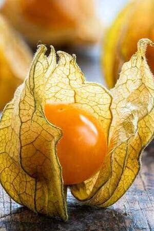 Physalis Goldvital