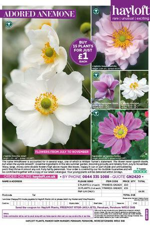 Anemone Mixed Collection