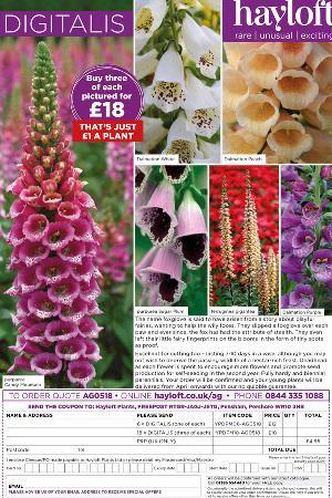 Digitalis purpurea Collection