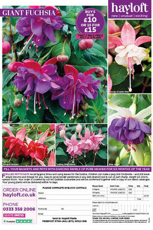 Giant Fuchsia Collection