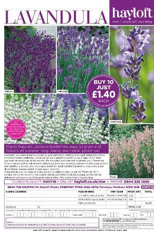 Lavandula Mixed Collection