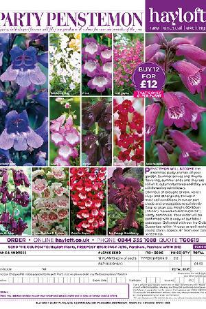Party Penstemon Collection