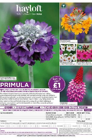 Primula Collection