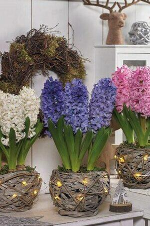 Hyacinth Baskets