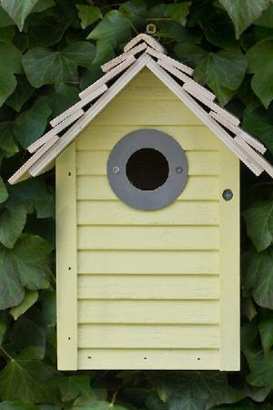 New England Nest Box Lemon