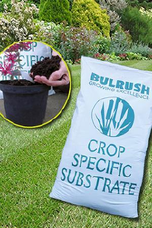 Bulrush peat-based & ericaceous Compost